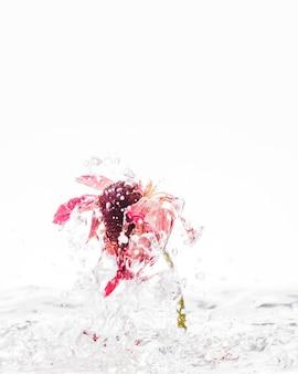 Orange gänseblümchen, das in wasser fällt
