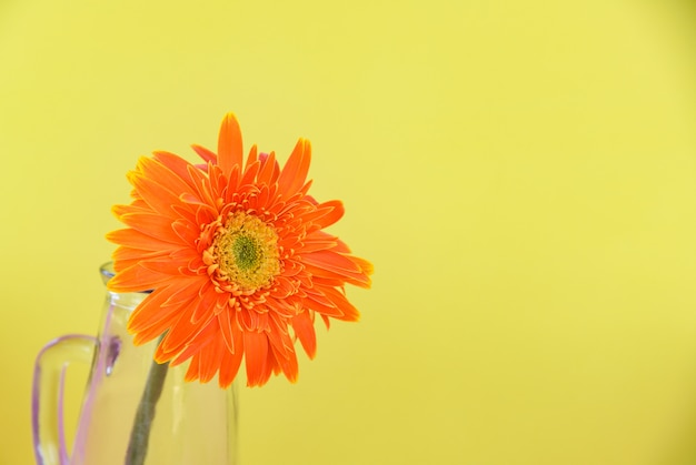 Orange gerberagänseblümchenblume im glasgefäß