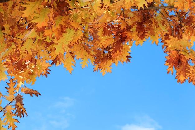Orange herbstlaub mit blauem himmelshintergrund