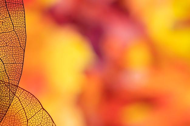 Orange herbstlaub mit kopienraum