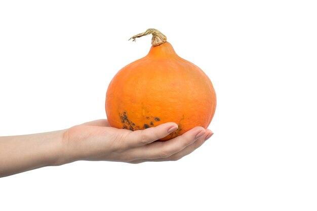 Orange hokkaido-kürbis in der hand isoliert auf einem weißen hintergrundfoto