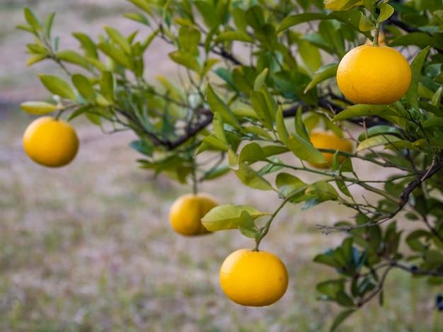 Orange ist eine vitaminreiche frucht.