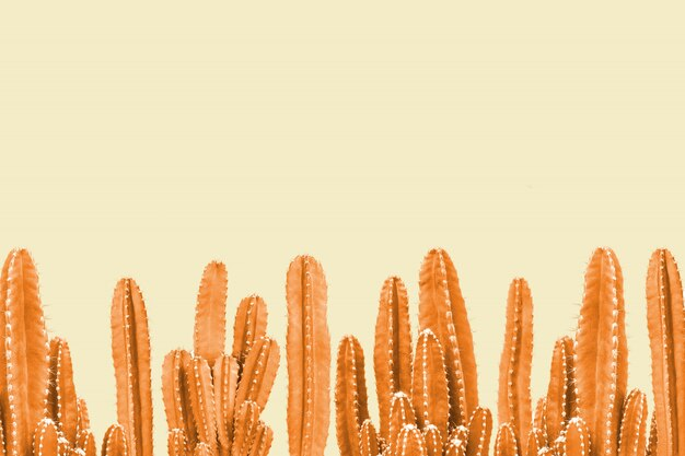 Orange kaktus auf gelbem hintergrund