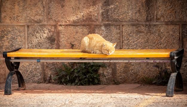 Orange katze, die auf gelbem holzstuhl im freien schläft