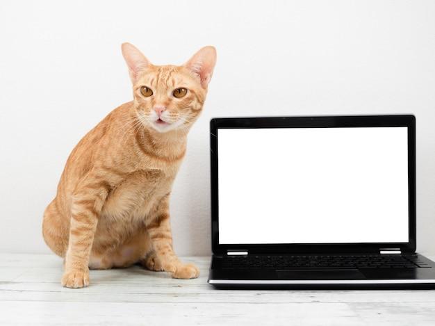 Orange katze mit laptop-weißem bildschirm auf dem tisch