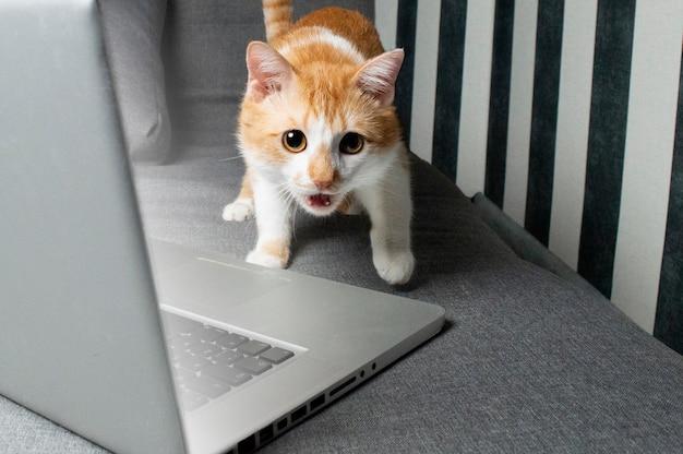 Orange lustige katze, die nahe dem laptop sitzt