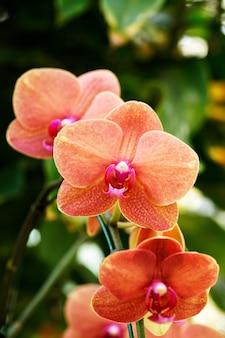Orange orchidee auf baum
