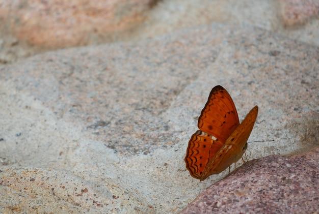 Orange schmetterling auf steinboden