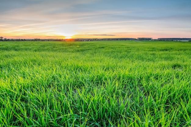 Orange sommersonnenuntergang über einem grünen feld