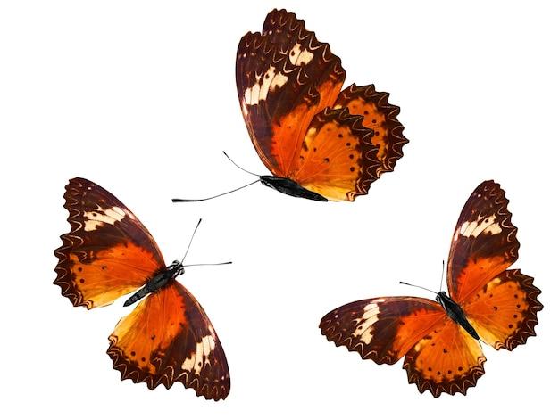 Orange tropische schmetterlinge. tropische insekten. isoliert auf weißem hintergrund