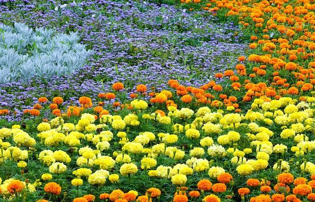 Orange und gelbe ringelblumen auf blumenbeet.