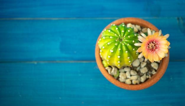 Orange und rote farbe der lobivia-kaktusblume in einem topf