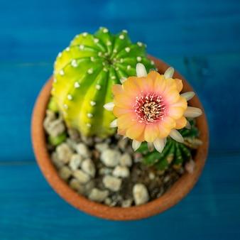 Orange und rote farbe der lobivia-kaktusblume