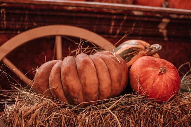 Orangefarbene kürbisse im heu auf dem bauernmarkt natürlicher hintergrund halloween und thanksgiving