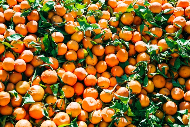 Orangen auf dem markt in marrakesch