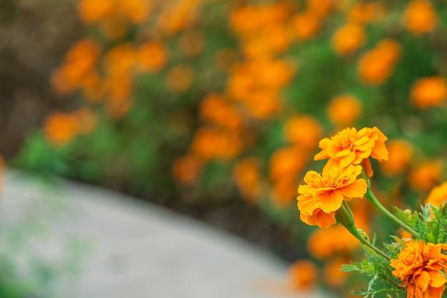 Orangenblume im park und verwischen