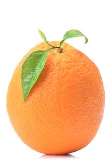 Orangenfrucht