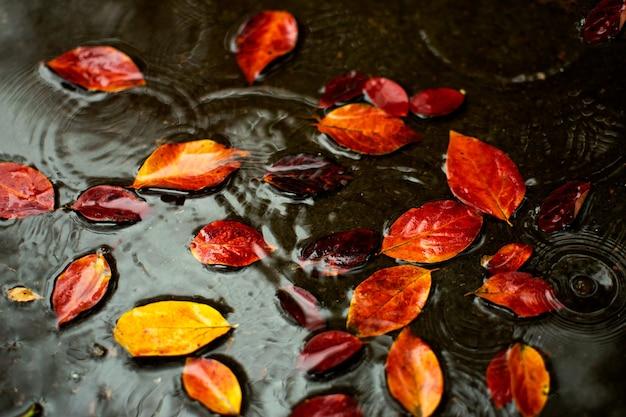 Orangerotes blatt auf dem wasser, regentropfen. herbst auf der straße
