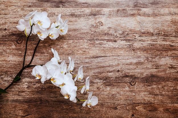 Orchidee auf draufsicht des natürlichen braunen hölzernen hintergrundes