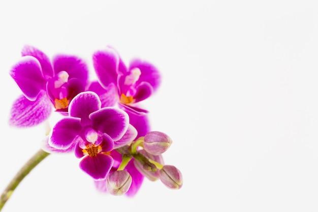 Orchidee auf weiß. spa- und wellnes-szene.