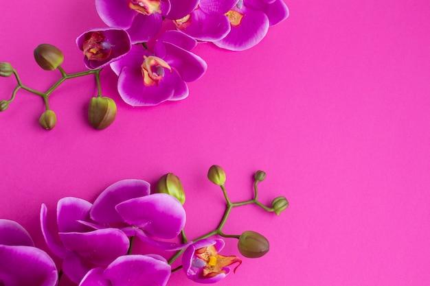 Orchidee blüht auf einem violetten kopienraumhintergrund