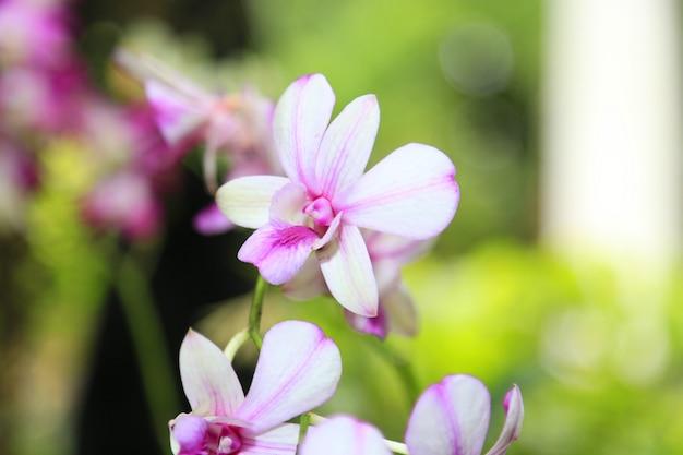 Orchidee frühling blumen hintergrund
