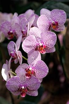 Orchidee in der farm