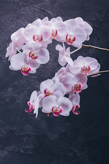 Orchidee in voller blüte auf einem dunklen hintergrund