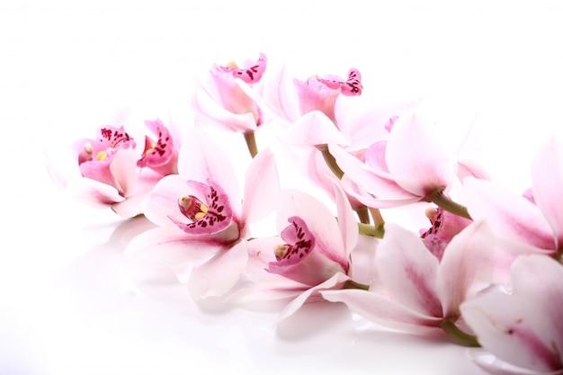 Orchidee über weißem hintergrund