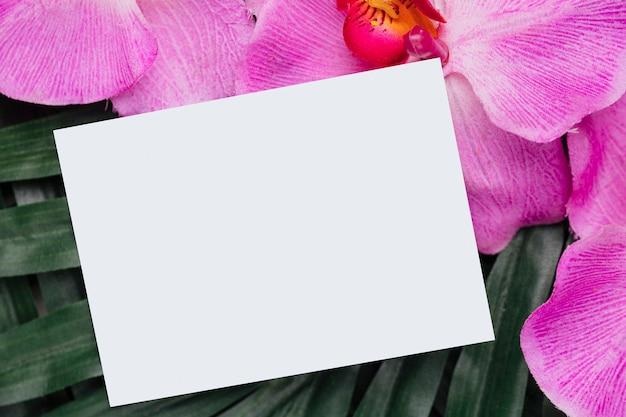 Orchidee und tropische blätter mit exemplarplatz