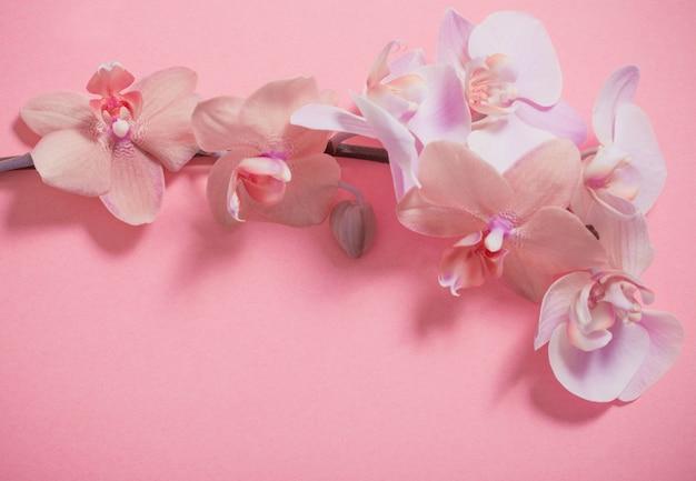Orchideen an der rosa wand