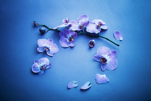 Orchideen auf blauem hintergrund