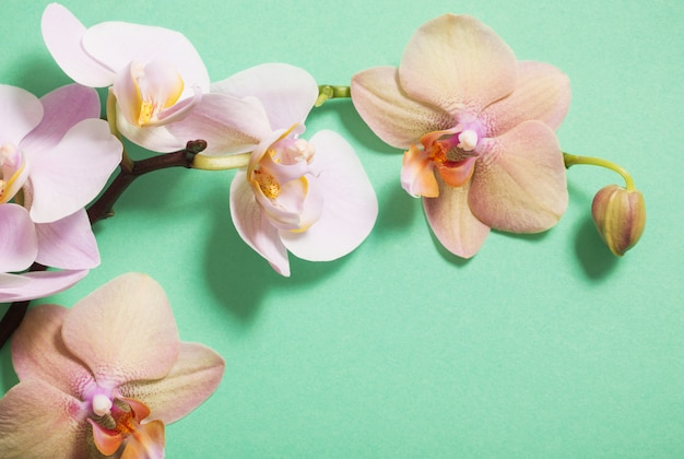 Orchideen auf grünem hintergrund