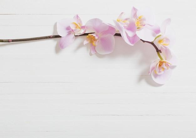 Orchideen auf weißem hölzernem hintergrund