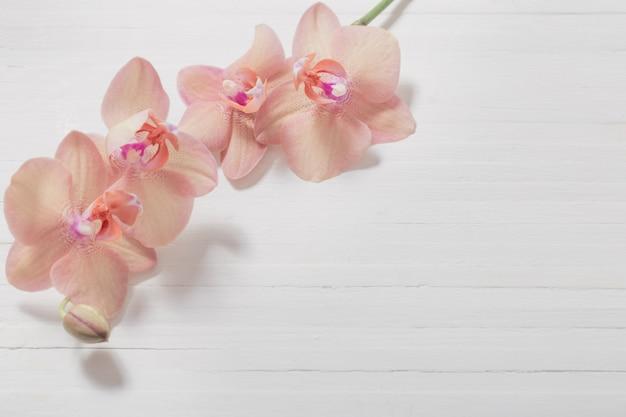 Orchideen auf weißer holzwand