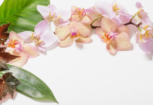 Orchideen auf weißer wand