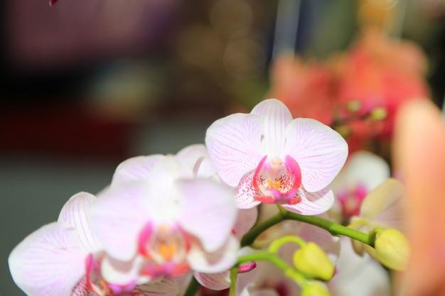 Orchideen frühling blüht hintergrund