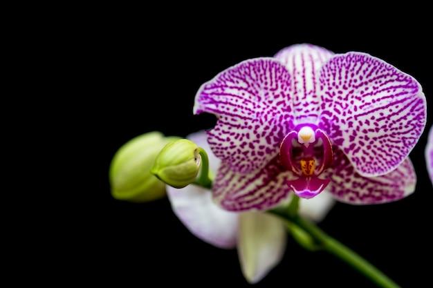 Orchideen im garten haben einen schwarzen hintergrund.