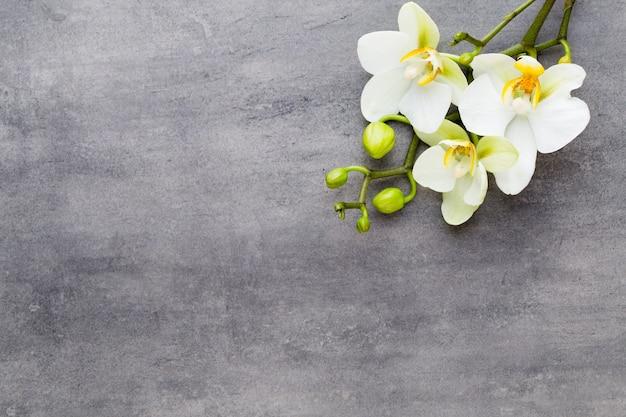 Orchideen- und badekurortsteine auf einem steinernen hintergrund. spa- und wellnessszene.