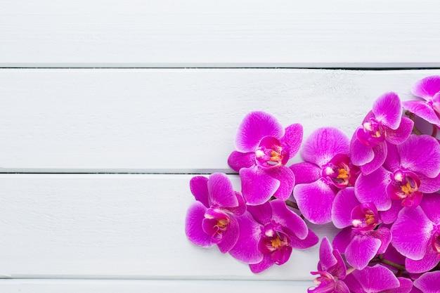 Orchideen- und kursteine auf einem stein. spa- und wellnes-szene.
