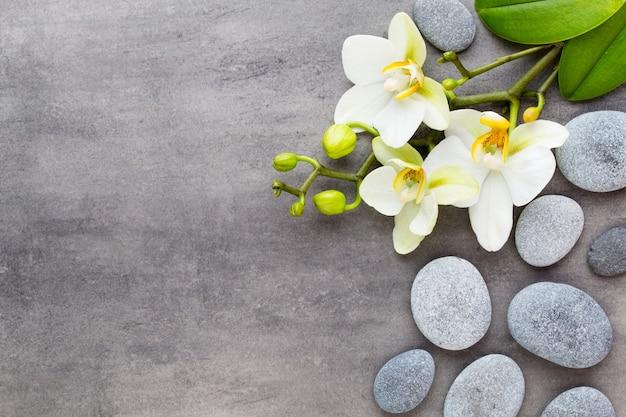 Orchideen- und kursteine auf einem stein. spa- und wellnessszene.