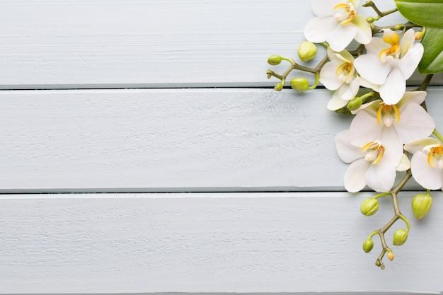 Orchideen- und kursteine auf einem steinhintergrund. spa- und wellnes-szene.