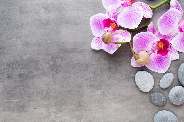 Orchideen- und kursteine auf einem steinhintergrund