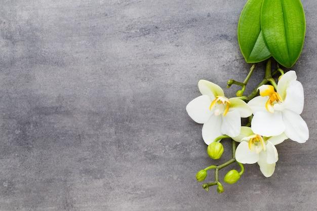 Orchideen- und spa-steine auf minimalistischer oberfläche