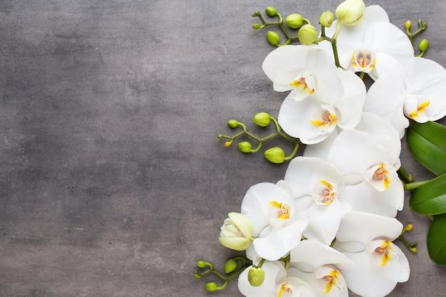 Orchideen- und spa-steine auf stein. spa und wellnes wohnung lag.