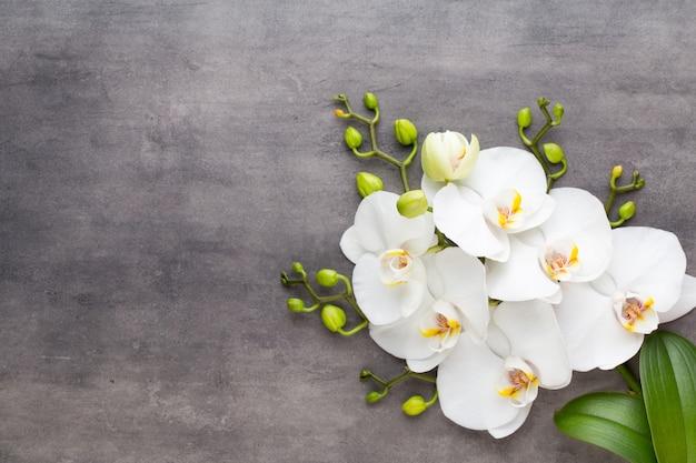 Orchideen- und spa-steine auf stein. spa und wellness flach liegen.