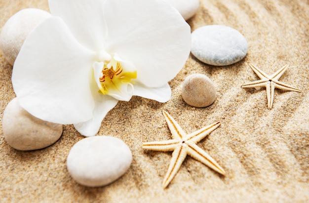 Orchideen und steine