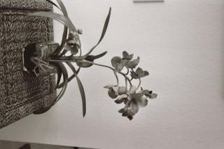 Orchideen, weiß