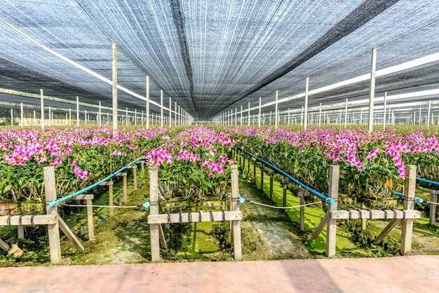 Orchideenbetriebsgärtnerei