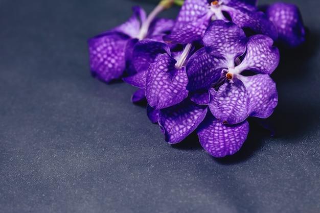 Orchideenblau auf einfachem grauem hintergrund